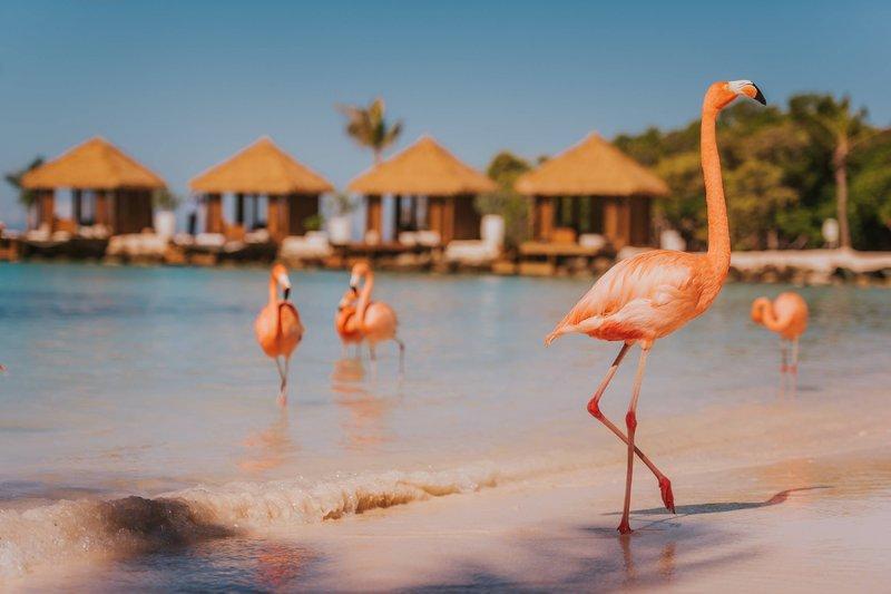 Renaissance Aruba Resort & Casino - Flamingo Beach <br/>Image from Leonardo