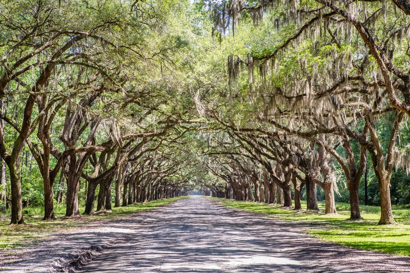 Holiday Inn Savannah Historic District-Savannah's sweeping Live Oak Trees are a thing of beauty<br/>Image from Leonardo
