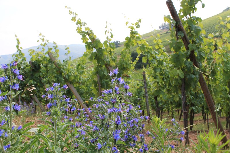 Holiday Inn Express Strasbourg Sud-Discover the Alsace Wine Route<br/>Image from Leonardo