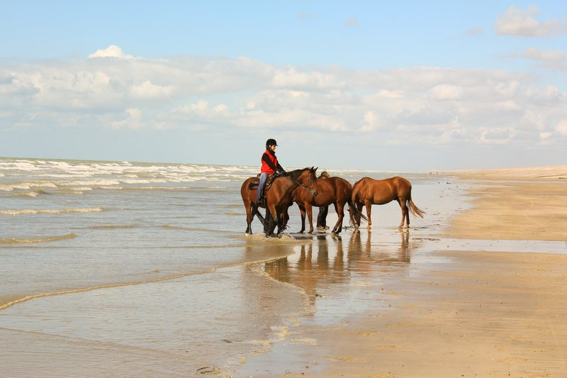 Mercure Amiens Cathedrale Hotel-Seaside Horses Ballades<br/>Image from Leonardo