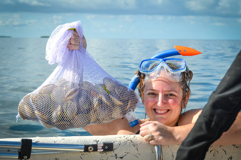 Holiday Inn Express Crystal River-Scalloping just minutes away!!!<br/>Image from Leonardo