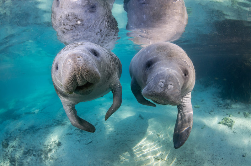 Holiday Inn Express Crystal River-Manatee tours in Homosassa and Crystal River<br/>Image from Leonardo