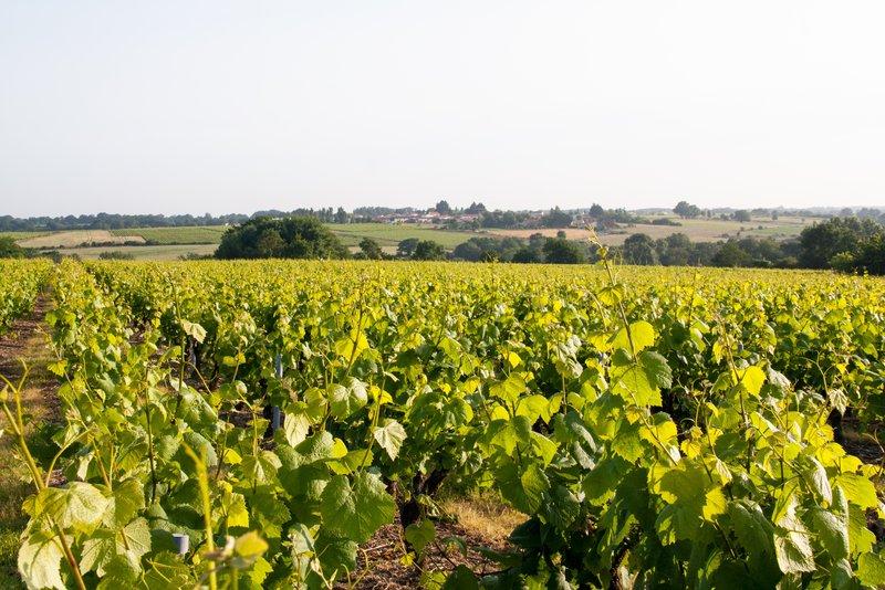 Holiday Inn Express Saint - Nazaire-Vineyards around Nantes<br/>Image from Leonardo