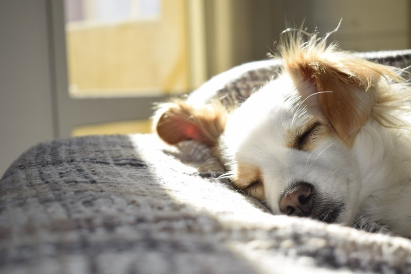 Holiday Inn Savannah Historic District-Bring Fido along! Our Historic District hotel is pet-friendly<br/>Image from Leonardo