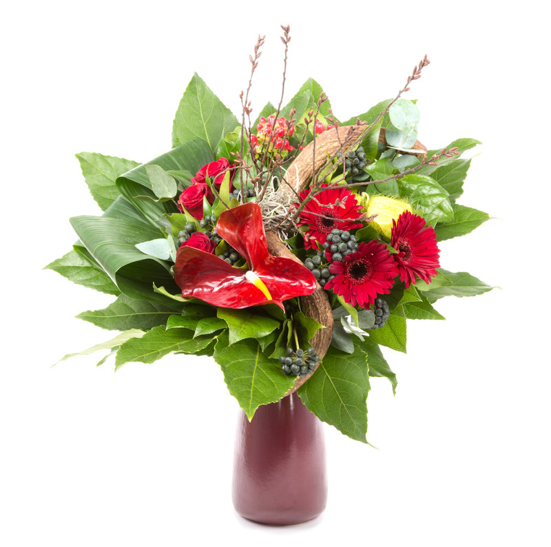 Casa De Campo - Tropical Flowers Stock <br/>Image from Leonardo