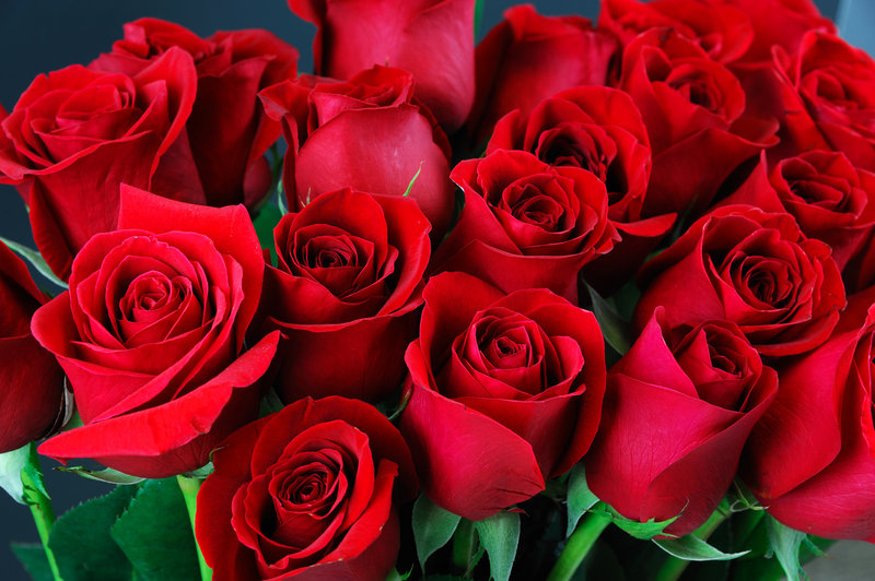 Casa De Campo - Roses bouquet <br/>Image from Leonardo