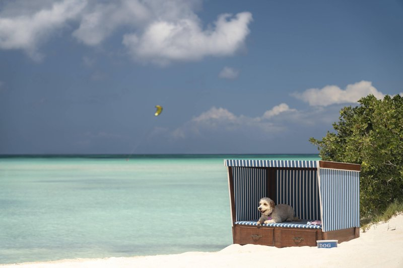THE RITZ-CARLTON, ARUBA - Dog Beach Cabanna <br/>Image from Leonardo