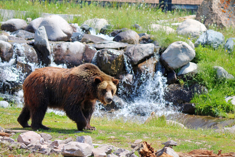 Holiday Inn West Yellowstone-Grizzly & Wolf Discovery Center in West Yellowstone<br/>Image from Leonardo