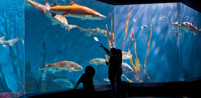 Holiday Inn Express & Suites Stamford-Norwalk Aquarium<br/>Image from Leonardo