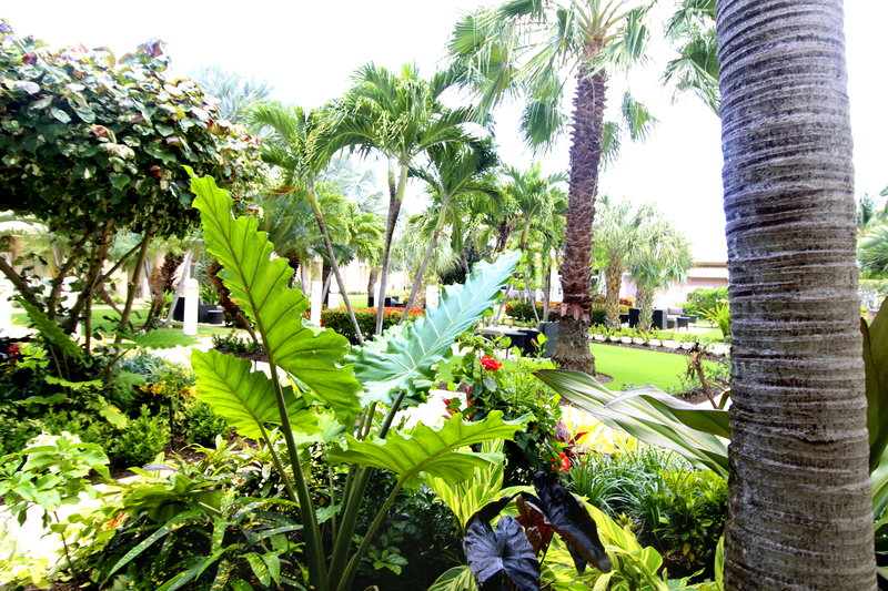 Holiday Inn Resort Grand Cayman-Courtyard, lush gardens, tropical, landscaping<br/>Image from Leonardo
