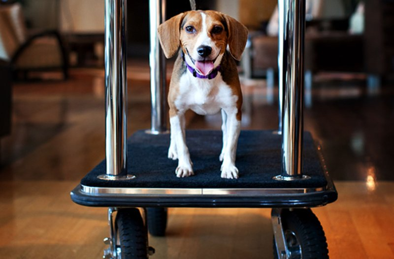 Holiday Inn Express & Suites Indio-Pet Friendly<br/>Image from Leonardo