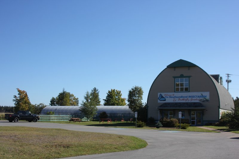 Holiday Inn Express Deer Lake-The Newfoundland Insectarium Credit to NL Tourism<br/>Image from Leonardo