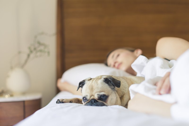Holiday Inn Express Tucson-Airport-Pet Friendly <br/>Image from Leonardo