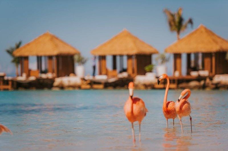 Renaissance Aruba Resort & Casino - Renaissance Island Flamingo Family <br/>Image from Leonardo