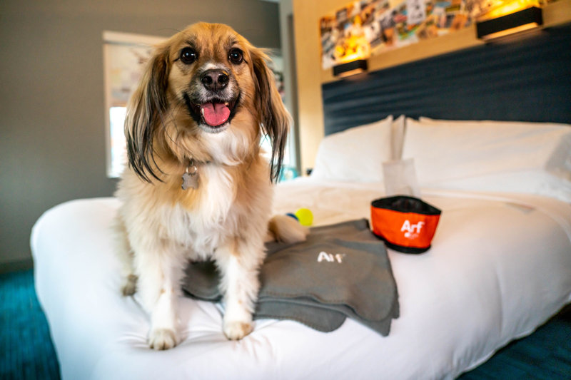 Aloft Louisville Downtown-Pup-Friendly Rooms<br/>Image from Leonardo