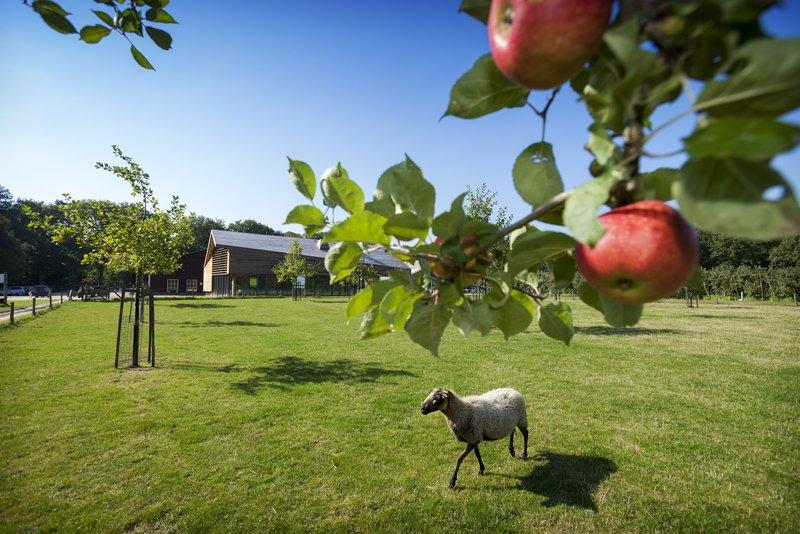 Holiday Inn Eindhoven-Philips Fruit garden<br/>Image from Leonardo