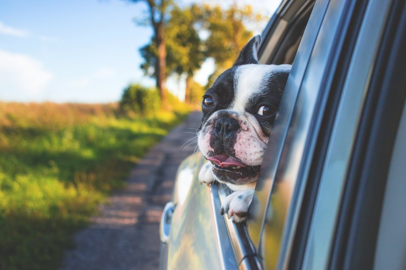 Holiday Inn Grand Rapids Downtown-Bring your furry friend with you! We are pet friendly!<br/>Image from Leonardo