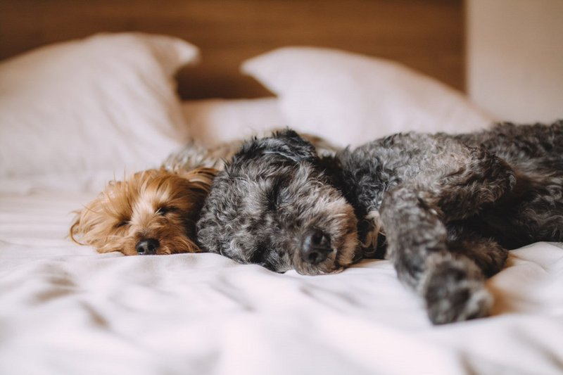 Holiday Inn Southend-Pet friendly rooms <br/>Image from Leonardo